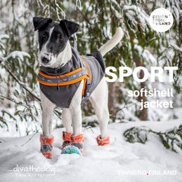 Diva wears grey SPORT softshell jacket size 40 cm and SNOW SPORT T harness size 1,5 photo: Tiina Korhonen/ _divathedog_