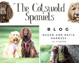 The blog: The Cotswold Spaniels