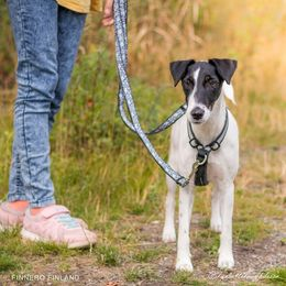 You can use OCEAN double adjustable leash with Salon harness photo: Tiina Korhonen / @Tassuteluayhdessa