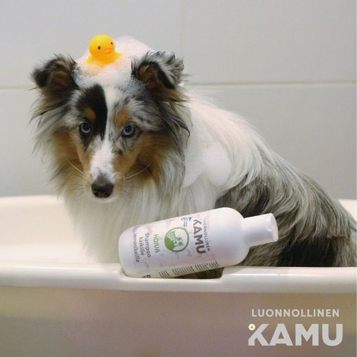 SOOTHING shampoo photo: sheltie_alma / Jenni Juhajoki