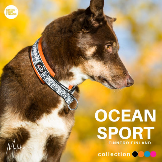 Priima have orange OCEAN SPORT collar size 2,5 photo: @miikkuvaan