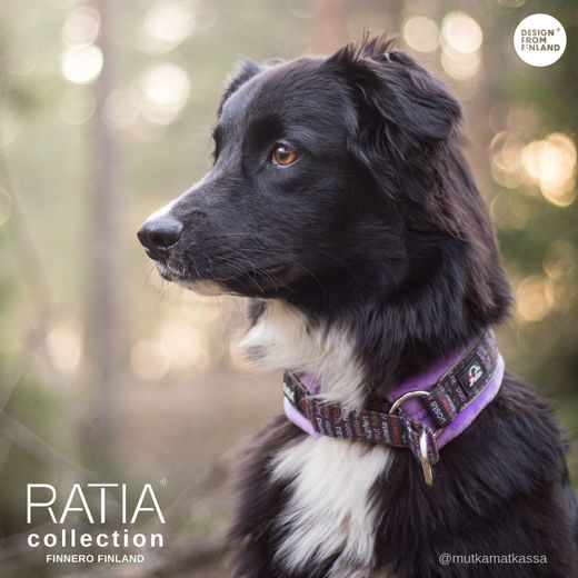 Mutka wears Ratia soft collar size 3 photo: @mutkamatkassa / Karoliina Laakkonen
