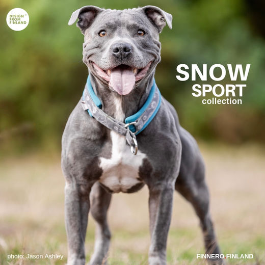 SNOW SPORT collar turquoise Ramsey photo:Jason-Ashley